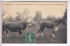 CPA SAUMONT LA POTERIE 76 - ANIMAL TAUREAU COTENTIN POULICHE CHEVAL 1909 ~C90