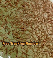 FAIRY SHRIMP 20,000 EGGS ALIVE FOOD FRESH 90% HATCH FOR KILLIFISH / FISH FOOD