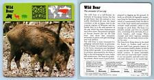 Wild Boar - Mammals - 1970's Rencontre Safari Wildlife Card