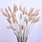 30x Natural Rabbit Tail Grass Bunny Tails Dried Flower Bouquet Home Decor  Uk