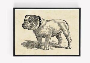 Vintage Bulldog dog Print Picture Wall Art Unframed home Decor A4 1