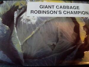 Robison,s 0riginal Gaint champion cabbage.