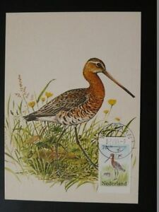 bird (stamp from booklet) maximum card Netherlands 72272