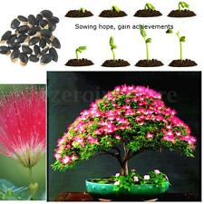 30PCS Seeds Albizia julibrissin Mimosa Tree Pink Siris Persian Silk Tree Seed