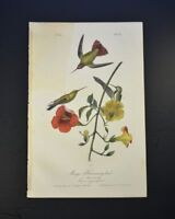 John James Audubon. Mango Hummingbird.  No 51. Plate 251.