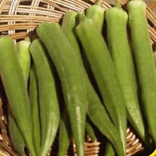 1 Lb Emerald Okra Seeds - Everwilde Farms Mylar Seed Packet