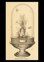 Framed Print - Victorian Butterflies & Flowers in Jar (Picture Poster Butterfly)