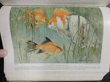 New listing 1924 Nat Geo Book H Murayama Color Prints Goldfish Aquarium Fish + Blimp Photos