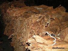 500+ Graines de tabac BIO, tobacco 'Nicotiana tabacum' Virginia Gold seeds