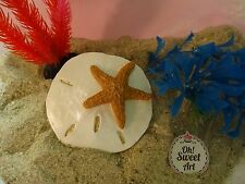 Sand dollar shell star silicone Mold Soap  fondant cake decorating  mould