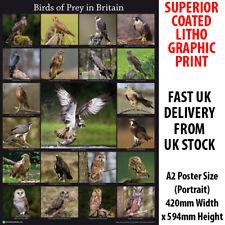 Birds of Prey in Britain Litho Art Print Poster A2 59cm x 42cm BLPA2P08