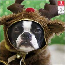 Pack de 5 festive chien Prince's Trust charité Cartes de Noël Packs de cartes de Noël
