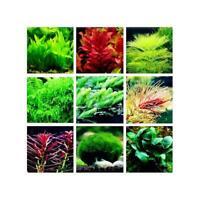 100 stücke Aquarium Pflanzen Mix Samen Wasser Gräser Gelegentliche Wasserpf F6L4