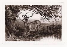 "Strong Heywood HARDY 1800s ORIGINAL Etching ""Deer under a Large Tree"" FRAMED COA"