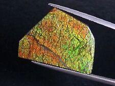 Ammolit / Ammolith 26,77 Ct feiner Cabochon 29mm (611m)