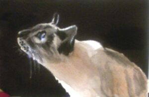 ACEO Siamese Cat bird watching print from Original Watercolor painting