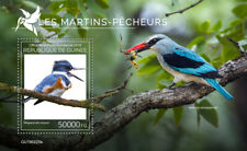 Guinea 2019  fauna Kingfishers  S201908