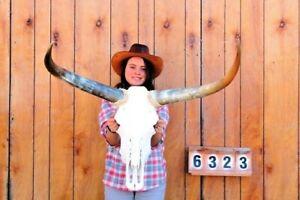 "STEER SKULL LONG HORNS MOUNTED 2' 8"" COW BULL TAXIDERMY LONGHORN H6323"