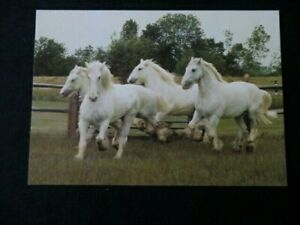 Vintage postcard of Whitbread Shires at the Whitbread Hop Farm, Beltring, Kent