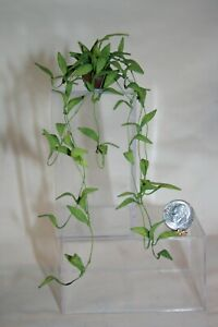 Miniature Dollhouse Vining Potted Plant U Can Drape Vines over Something 1:12 NR