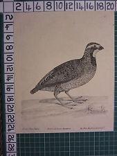 c1735 PRINT THE NEW ENGLAND PARTRIDGE ~ ANTIQUE BIRD PRINT ELEAZER ALBIN ~