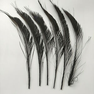 Beautiful Black 10-100pcs Natural Peacock Feather 10-14 inch/25-35 cm Decoration