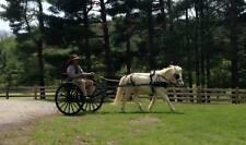 E-Z TRAIL Easy Entry Metal Show Cart With Wooden Wheels Flush Hubs Pony 9-11.2Hh