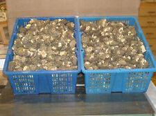 1 pound fresh natural dried morel mushrooms 2020 crop
