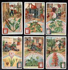 Medicinal Plants Liebig Card Set 1907 Aloe Camphor Saffron Ricinus Tibet Cinchon