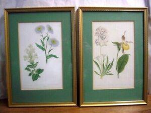 "Pair Of Vintage Framed Floral Botanical Hand Drawn Prints ~13.5"" x 9.5"""