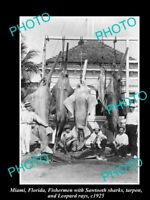 OLD POSTCARD SIZE GAME FISHING PHOTO OF SHARKS AND RAYS MIAMI c1925