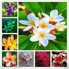 10 Seeds Plumeria Mixed Varieties Fragipani Mixed Combo Seeds Pack