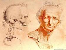 Jean Galbert Savage # 2 científica Anatomía Reproducción Impresa Sobre A4 Lona De Papel