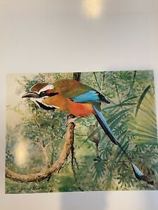 "Louis Agassiz Fuertes & The Singular Beauty of Birds, ""Turquoise-browed Motmot"""