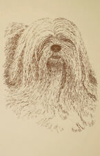 Lhasa Apso Dog Art Print #27 Word Drawing Kline will add your dogs name free.