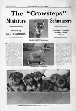 MINIATURE SCHNAUZER OUR DOGS 1934 DOG BREED KENNEL ADVERT PRINT PAGE CROWSTEPS