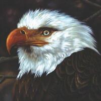 Mogwai - The Hawk Is Howling (NEW CD)