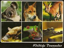SIX PLACEMATS (Wildlife Downunder) Australia NEW & SEALED