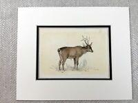 1853 Antico Stampa Capriolo Deer Roe Wild Chevreuil Originale Vittoriano Art