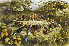 Répétition en Fairyland Fée Mythologie Décoration Vintage Affiche Tailles A1 A2