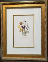 Hand Painted Iris Etching Art Print Custom Framed 29x23 Botanical Floral
