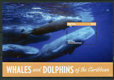 Nevis 2015 Mnh Whales & Dolphins of Caribbean Ii 1v S/S Sperm Whale Marine