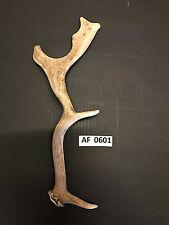 Fallow antler unique wildlife decoration rustic exotic knife handle Af0601