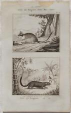 BUFFON ORIGINALE 1850 TOPO GUERCINO LEROT GARDEN DORMOUSE ANIMALS ZOOLOGIA 1850