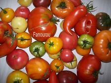 100 graines de tomates anciennes, Bio