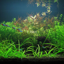 1000x Bulk Aquarium Mixed Water Plant Grass Seeds Aquatic Home Fish Tank Decor c