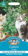 Mr Fothergills Catmint Catnip Nepeta cataria Seed