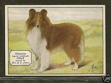1938 UK Dog Art Photo Hand Colored Ardath Cigarette Card ROUGH COATED COLLIE