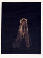William Wegman Bridal 1989 Famous Weimaraner Dog Portrait Postcard 4x6