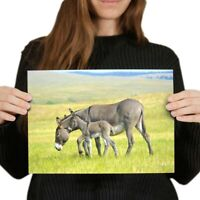 DONKEY FOAL 2 baby Ltd Edit art drawing prints 2 sizes A4//A3 or Note Card